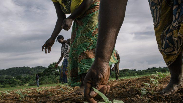 Farmers Zambia_0