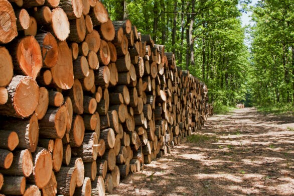 forestry-timber-1