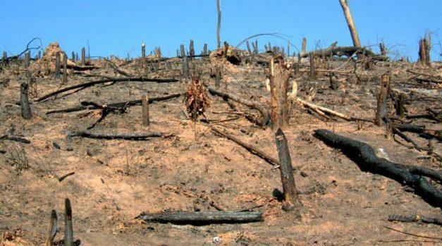 deforestation 1