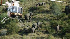 elephants tourism