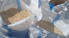 bags-of-maize